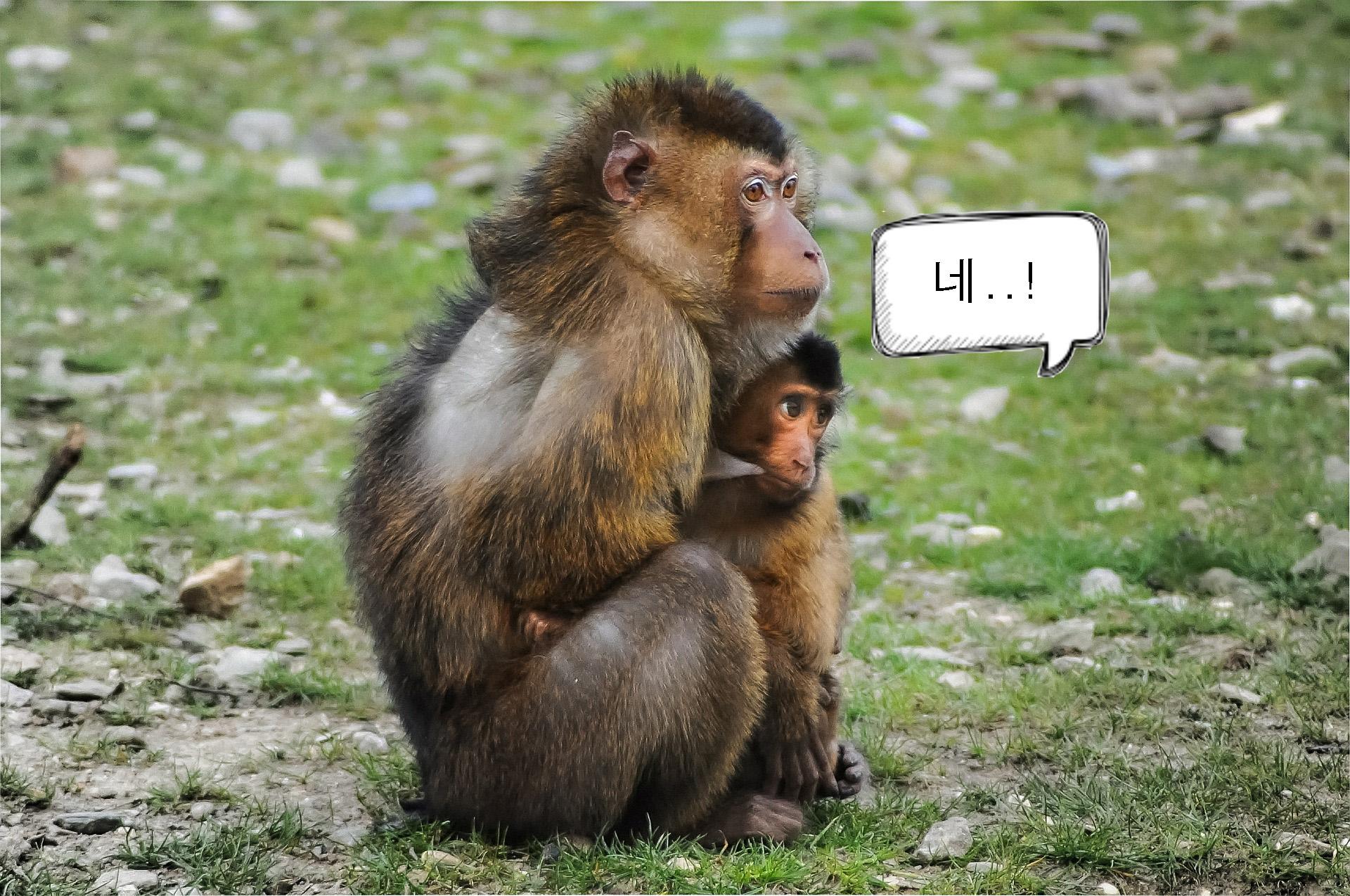 네 하는 원숭이